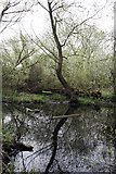 SK4833 : Pond in Fox Covert by David Lally