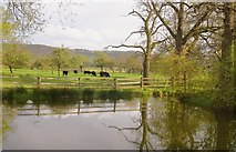SO3951 : The lake, The Ley, Weobley by Philip Pankhurst