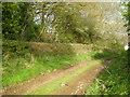 SJ6205 : Track beside a wood by Row17