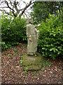 NT9502 : Lady's Well, Holystone by wfmillar