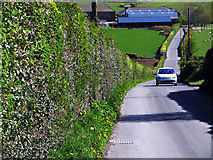 J4772 : The Moat Road near Scrabo by Rossographer