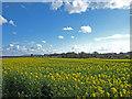 NU2406 : Rape field near Warkworth by wfmillar