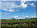 NU2409 : Looking over field to the salt marches and dunes, near Alnmouth by wfmillar