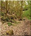 SE4006 : Scream in the disused railway cutting by Steve  Fareham