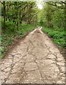 SE3906 : Concrete road from Tyers Hall Farm by Steve  Fareham