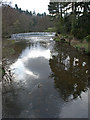 NU1713 : River Aln, Alnwick by wfmillar