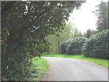 SH4555 : The main drive towards the front of Plas Glynllifon house by Eric Jones