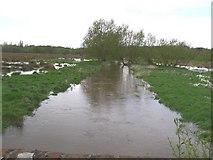 TQ0357 : Abbey Stream, from Bourne Stream Bridge by Brian Green