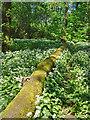 SE8810 : Brumby Woods, Scunthorpe by Paul Harrop