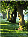 TA1828 : Sunlit Tree Trunks on Far Bank by Andy Beecroft