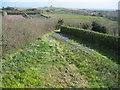 SV9111 : Flower field at Sunnyside Farm, near Rocky Hill by Caroline Tandy