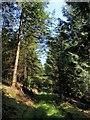 SX3877 : Woodland track by Derek Harper