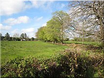 G9512 : Low-lying field near the southern end of Lough Allen by Oliver Dixon