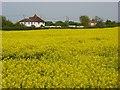 SU8976 : Farmland, Holyport by Andrew Smith