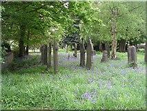 SE1321 : St Matthew's Graveyard - Crowtrees Lane, Rastrick by Betty Longbottom