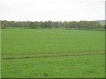 NT5682 : Spring barley, Balgone by Richard Webb