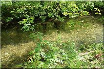 SX4970 : Buckland Monachorum: on the banks of the Walkham by Martin Bodman