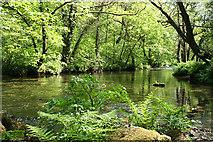 SX4970 : Buckland Monachorum: river Walkham 2 by Martin Bodman