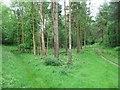 SU7693 : Paths through Penley Wood by Bryan Pready