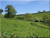 SX8950 : Fields near Brownstone by Derek Harper