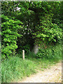 TG3524 : Public footpath to Wayford Road (A149) by Evelyn Simak