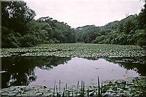 SR9794 : Bosherton Lily Ponds, Pembrokeshire taken 1968 by William Matthews