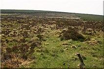 S0108 : Rough heathland by kevin higgins