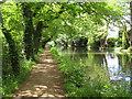 TQ0561 : River Wey Navigation near Byfleet by Nigel Cox