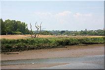 TM2850 : Bank of the River Deben by Bob Jones
