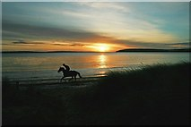 S6905 : Gallop at sunrise by tony quilty