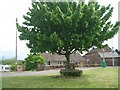 NY3459 : Seat & Tree, Beaumont by Nigel Homer
