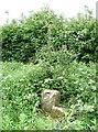 SE9132 : Everthorpe High Road by Paul Glazzard