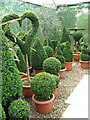 TG0928 : Topiary for every taste by Evelyn Simak