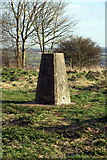 SU6022 : Trig Point on Beacon Hill by Pierre Terre