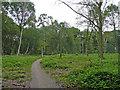 SU9846 : Footpath on Peasmarsh Common by Jonathan Billinger