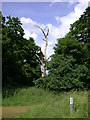 TL4241 : Dead tree by Icknield Way by Keith Edkins