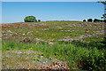 SN6044 : Forestry clearfell near Bryn-du by Nigel Brown
