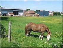 SJ9905 : Sutherland Farm by John M