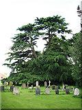 TM0099 : St Peter's church - churchyard by Evelyn Simak