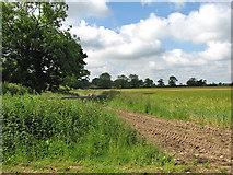 TM0099 : Barleyfield beside Hingham Road by Evelyn Simak