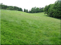 SO3566 : Down's Wood pasture by Peter Whatley