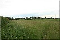 SK8177 : Farmland, Church Laneham (1) by Katy Walters