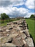 NZ1366 : Hadrian's Wall, Heddon-on-the Wall by wfmillar