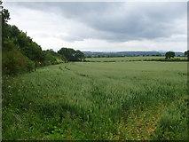 SJ4128 : Rural North Shropshire by Chris Wood
