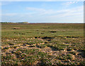 SD1874 : Saltmarsh at Scarth Bight: view south by Espresso Addict