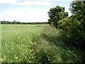 TA1747 : East of Seaton by Paul Glazzard
