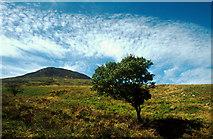NR4556 : Moorland near Proaig by Tom Richardson