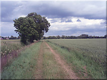 TF1409 : Rural track, Deeping Gate by Ajay Tegala