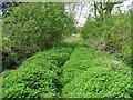 SK1920 : Footpath into nettles by Jonathan Billinger