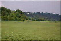 TQ2152 : Looking along the North Downs by Ian Capper